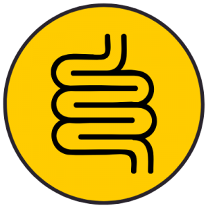 Graphic of Intestinal Tract